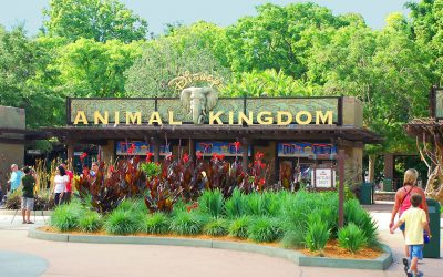 BIRTHDAY CELEBRATION @ ANIMAL KINGDOM